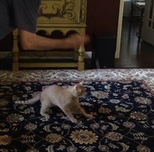 Julie's new cat, Uccelini